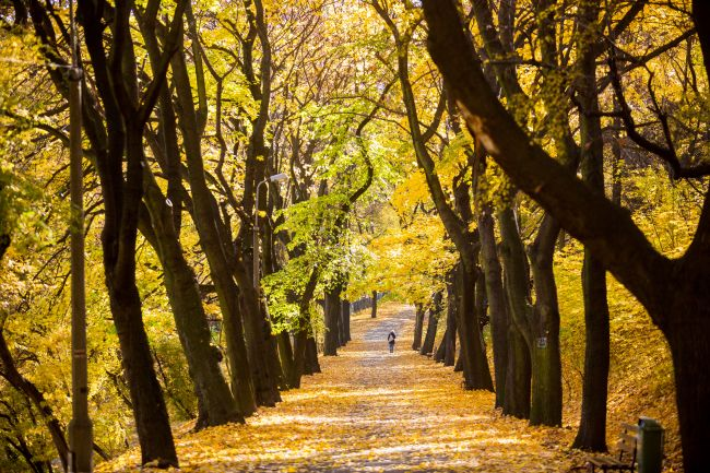 Mysłowice złożyły wniosek o zagospodarowanie terenów Promenady