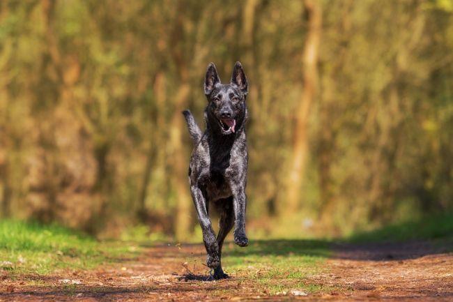Mysłowice bezpłatnie czipują psy