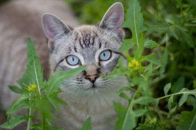 Trwa akcja kastracji i sterylizacji kotów