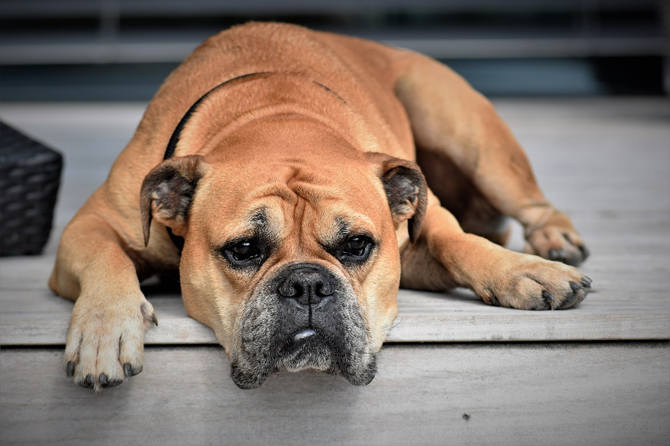 Bezdomne zwierzęta - gdzie i jak zgłaszać?