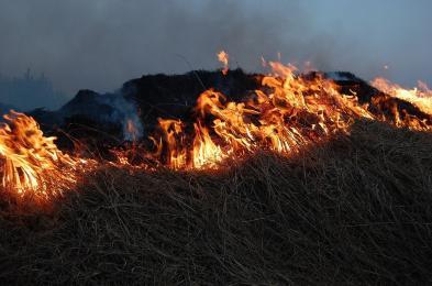 Wypalanie traw nielegalne i niebezpieczne